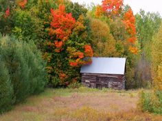Lovely 50 Shades, Cabin, Autumn, Fall, Plants, Shelters, Fall Season, Fall Season, Fifty Shades