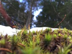 and again this enjoyable kind of moss Snow Trees, My Photos, Sky, Nature, Plants, Pictures, Heaven, Naturaleza, Photos