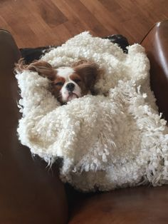 Discover Smart Cavalier King Charles Spaniel Personality Cavalier King Charles Spaniel Cute Source by goodkarmama Cavalier King Charles Spaniel, King Charles Puppy, Cute Dogs And Puppies, I Love Dogs, Doggies, Spaniel Puppies, Chihuahuas, Puppys, Beautiful Dogs
