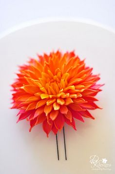 Gorgeous sunfire dahlia! Love it! New Favorite Flower?