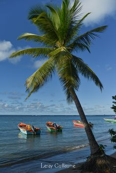 Martinique...take me away!