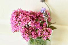 love this shot of wild flowers