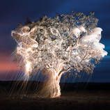 Vitor Schietti - Light drips from trees in long-exposre photographed dreamscapes.