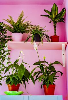 pink walls, stacked plants in the bathroom - Modern Bathroom Plants, Bathroom Colors, Small Bathroom, Bathrooms, Bathroom Pictures, Bathroom Ideas, Pink Walls, Diys, House Styles