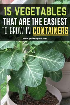 15 Vegetables That Are The Easiest To Grow In Containers Vegetable Garden For Beginners, Vegetable Garden Design, Gardening For Beginners, Gardening Tips, Garden Yard Ideas, Garden Projects, Growing Vegetables, Growing Plants, Regrow Vegetables