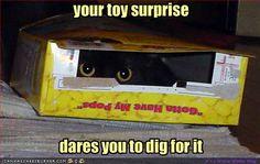 Surprise kitteh