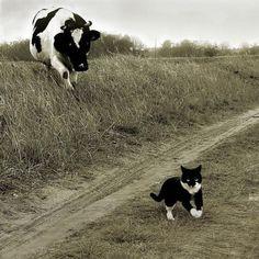 (;・`ω・´)  Cat lover is approaching...