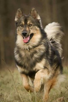 beautiful photo of German Shepherd dog http://meilleurs-rencontres.com/entre-filles/dogs-lovers.php