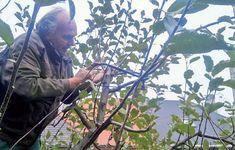 Rez jablone Plants, Plant, Planets