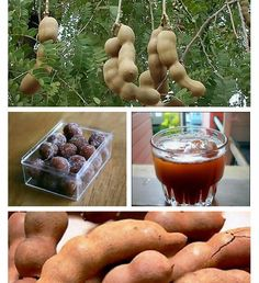 Tamarind. We make a tamarind saice for dipping or putting over street food or appetizers. These are very sour...but they have a sweet variet u can eat directly as well.