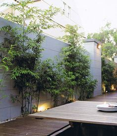 Trädgård bambu