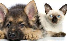 Rimuovere la pipì di cane/gatto con rimedi naturali fai da te. LIKE THE PERFECT COMBINATION OF PETS!!!!