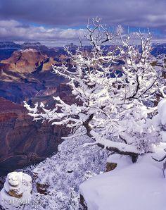 snow, Grand Canyon National Park, Arizona