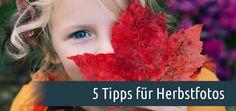 Hier finden Sie gute Tipps für schöne Herbstfotos. Nutzen Sie Farbkontraste, Nebel und die goldene Stunde für Ihre Herbstfotos.