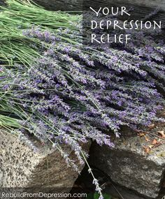 Get depression relief today from this common herb