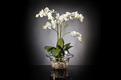 ETERNITY LIGHT ATOLLO 2 WITH PHALENOPSIS PLANT -MEDIUM