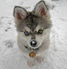 Personalized dog tag laser cutting pet tagdog ID by URARTDESIGN, $9.00