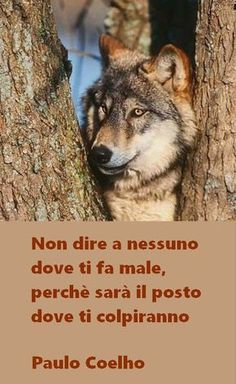 Non dire a nessuno… Italian Humor, Italian Quotes, Linkin Park, My Mood, Meaningful Words, Believe In You, Vignettes, True Stories, How To Memorize Things