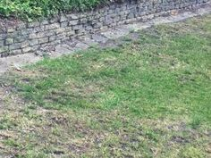 Tips for Watering and Feeding Your Lawn