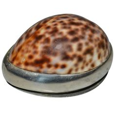 19th Century Empire Conch Shell and Silver tobacco box   From a unique collection of antique and modern tobacco accessories at https://www.1stdibs.com/furniture/more-furniture-collectibles/tobacco-accessories/