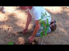 Grey Water is water from the house which is normally washed down the drain (such as laundry water), but is actually good for trees. This video is part of a s. Grey Water System, Water Systems, Tv Videos, Country Living, Laundry, Trees, Garden, Plants, Diy