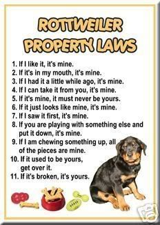 Rottweiler Property Laws