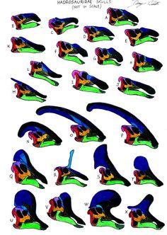 Hadrosauridae Family
