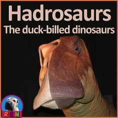 Dinosaurs: Hadrosaurs - More than just an informative PowerPoint presentation, this educational package contains a few higher level thinking activities to engage the students. You will learn what characteristics define a hadrosaur, as well as, some membe Elementary Science, Science Education, Elementary Schools, Upper Elementary, Science Lessons, Science Activities, Classroom Activities, Creative Teaching, Animals For Kids