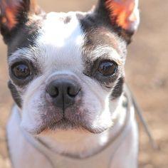 model:こうめ #doghuggy#ドッグハギー