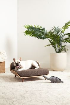 Looking for Mid-Century Modern Dog Beds, Crates and Pet Bowls? You've come to the right place! Check out Mid-Century inspired dog products right here. Cute Dog Beds, Dog Beds For Small Dogs, Diy Pet, Food Dog, Pet Furniture, Pet Bowls, Dog Houses, Dog Accessories, Dog Design