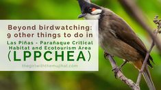 Beyond birdwatching: 6 other fun things to do in LPPCHEA