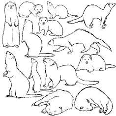 Ferret Sketch Dump by SanjanaStone