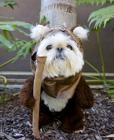 My mommy (sigh) really loves Star Wars. Maybe George Lucas needs a ewok for his next movie!?