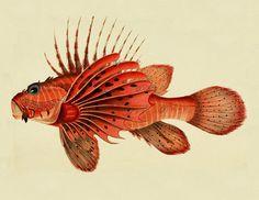 impresión del vintage peces, playa bricolaje Casa Decor, vintage imagen imprimible, Nº 689.