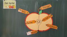 Dieses Jahr mache ich mit den Erstklässlern eine kleine Sequenz zum Thema Apfel… This year I'm doing a little sequence with the first years about apple. Montessori Education, Art Education, Easy Science Experiments, Thing 1, Elementary Schools, Student, Apple, Blog, Schooldays