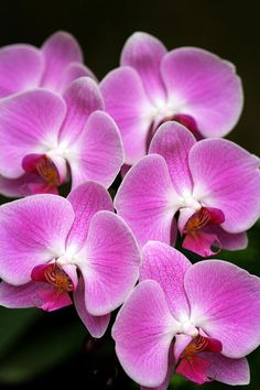 Pink Orchids for my babe :)