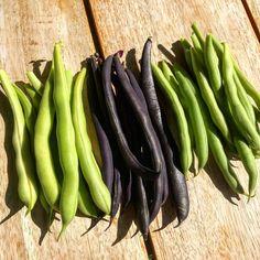 Fazolky s balsamikovým octem Carrots, Vegetables, Food, Essen, Carrot, Vegetable Recipes, Meals, Yemek, Veggies