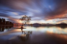 One Calm Tree by Rob Dickinson | Earth Shots