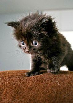 Top 5 Cute Black Cats