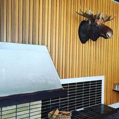 Legendan mukaan itse Kekkosen kaataman hirven pää.  Totta vai tarua? #Kekkonen @langvikhotel #revolttiexperience #tapahtumamarkkinointi #langvikhotel http://www.langvik.fi/
