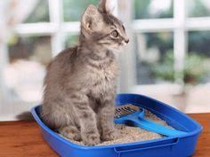 A Caixa de Areia Gera Riscos à Saúde do Seu Gato. Entenda o Porquê! #gato #cats #catsofinstagram #pets #felinos #veterinarian #animals #garfield #gatos