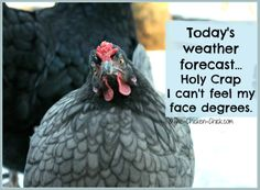Today's weather forecast...Holy Crap I can't feel my face degrees.
