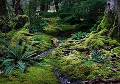 The moss garden, a magic playground for little goblins. Planted in 1982 with imput from Landscape Architect Richard Haag and Richard Brown.