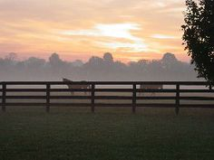 Horse Farm and Horse Property Buying Tips for Middle Tennessee