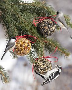 Neat idea...have Christmas ornaments for the birds this year.