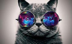 Cat galaxy glasses u go cat
