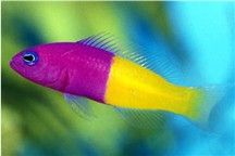 Live Saltwater Fish , Live Corals,Saltwater Fish Aquariums, Tropical Fish and Aquarium Supplies