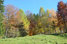 Farbenvielfalt im #Herbst in seiner schönsten Form - so macht #Outdoor und #Wandern noch mehr Freude