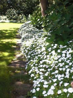 impatiens border - snail and slug resistant