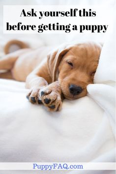 Am I ready for a dog? Do I have enough time/energy to allocate to a new puppy? Am I allowed to keep pets where I live? What breed suits my lifestyle? Will I get a mixed breed or a pure breed dog? Check the article for all 37 questions. Best Tea For Sleep, Sleep Tea, Best Puppies, Best Dogs, Dogs And Puppies, Puppy Care, Dog Care, First Night With Puppy, Sleeping Puppies